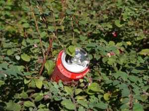 Can in Bush