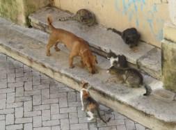 ipazia gatti poveri