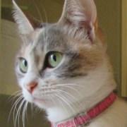 Hypatia Cat Author: Romanus