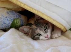 ipazia sotto coperta