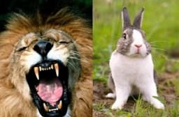 rabbit lion