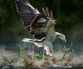 -Eagle-foto recortada