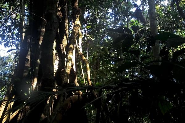 Nel fitto della selva