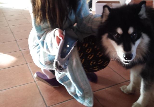 3-31 | Когда пес погрыз туфли его подруги парень не растерялся... Посмотрите, что он сделал!