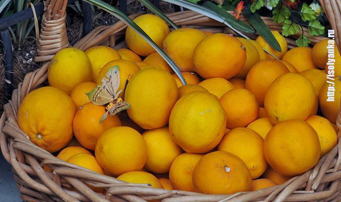 imon1 | Что произойдет, если положить пару лимонов на тумбочку у кровати? Лайфхаки, которые перевернут жизнь!