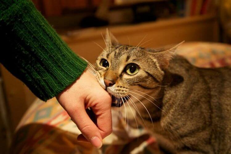 image7-66   Как кошки выражают свою любовь к людям: 10 оригинальных способов