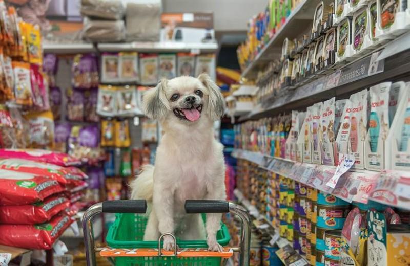 pet-stuff   Где купить товары и корма для животных