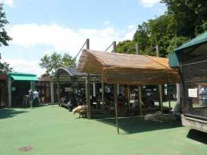 市川市動植物園で動物との触れ合い