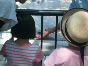 市川市動植物園カワウソが急接近