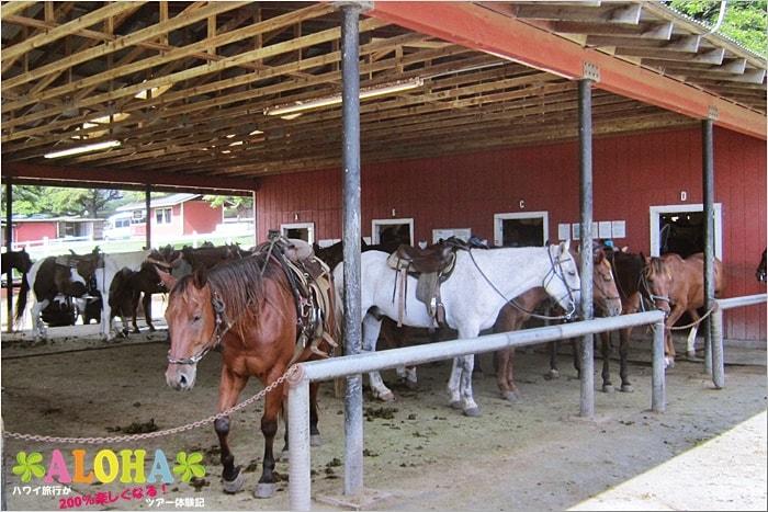クアロアランチの馬たち