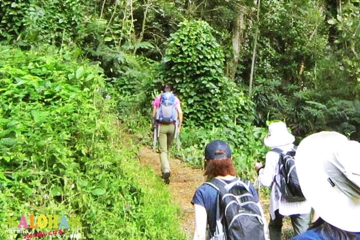 ハイキングコースの状況2