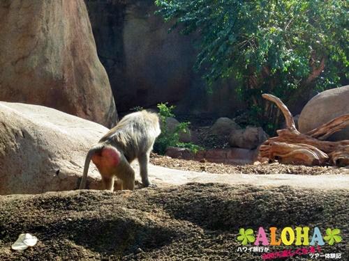 ホノルル動物園内23画像