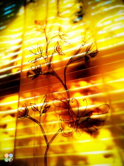 iphone-photography-lafayette-indiana-isphotographic-06
