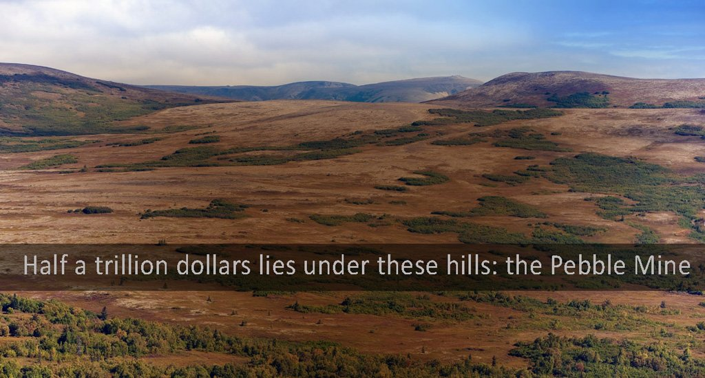 a half trillion dollars is just waiting to be harvested form the Pebble Mine