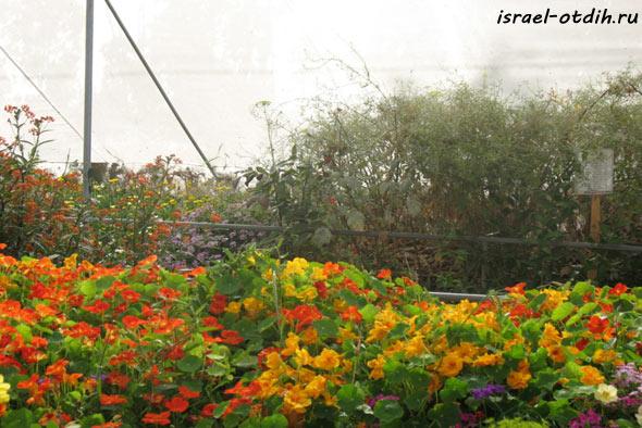 Бабочки в парке Утопия фото