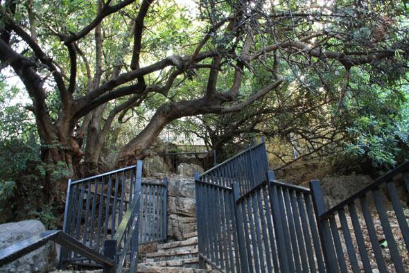 дерево в пкиине фото