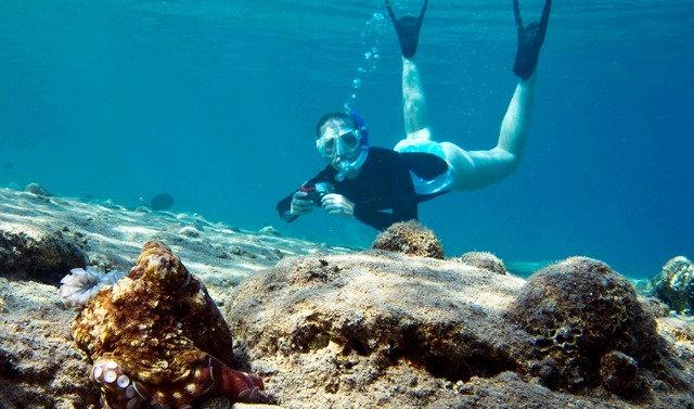 The Red Sea holds many colorful attactions for divers. Photo by Shai Oron/Interuniversity Institute for Marine Sciences