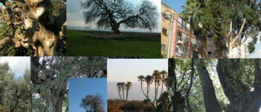 top-trees