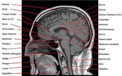 optimizar las funciones cerebrales