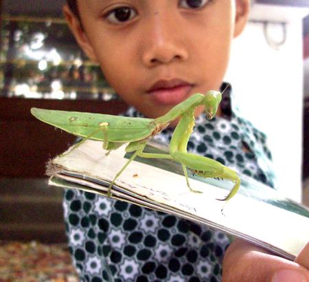 Ibrahim sedang mengamati belalang sentadu/sembah