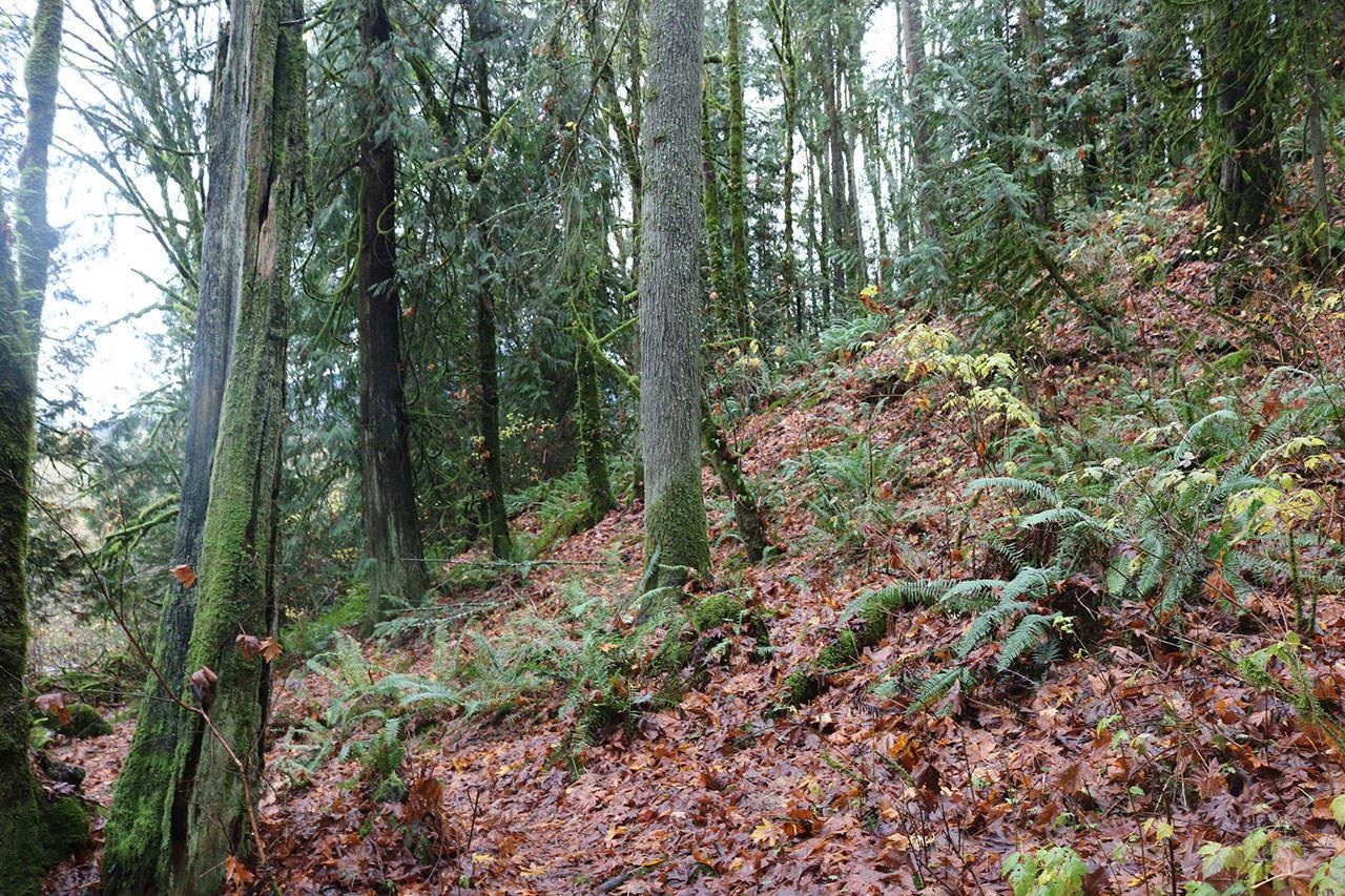 Fate of Cougar Mountain development still unknown