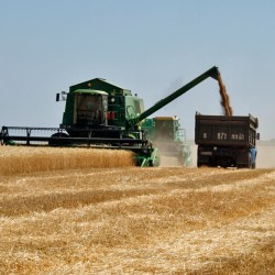 Symbiosis in Russia's and Ukraine's agricutural sectors by Natalia Mamonova