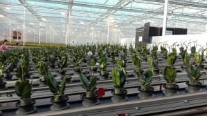 greenhouse-automation-1-IMG_20180207_103907_resized_20180724_101627138