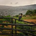 Rwanda Bird on a Fence