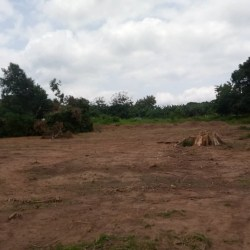 From possession to property: how the commodification of land affects youth participation in farming in Ghana