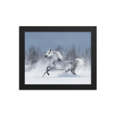 Arabian splashes in snow – Framed poster