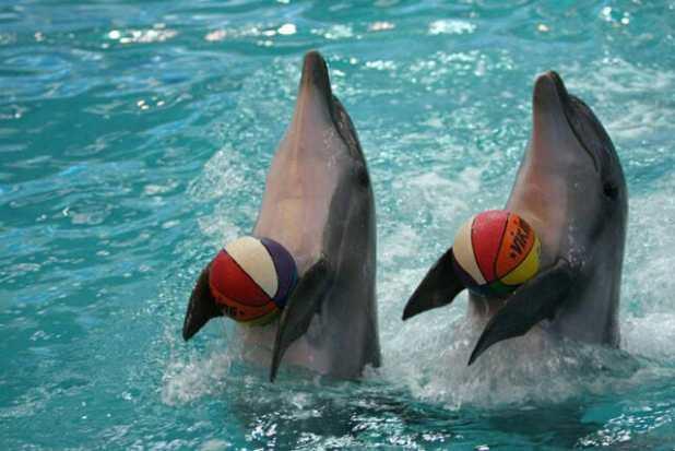 أسعار تذاكر عروض الدلافين
