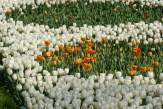 istanbul_tulip_festival_lale (16)
