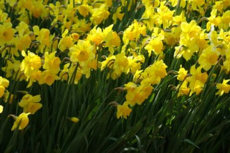 istanbul_tulip_festival_lale (4)