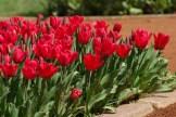 istanbul_tulip_festival_lale (8)