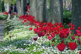 istanbul_tulip_lale_festival_ozgurozkok (79)