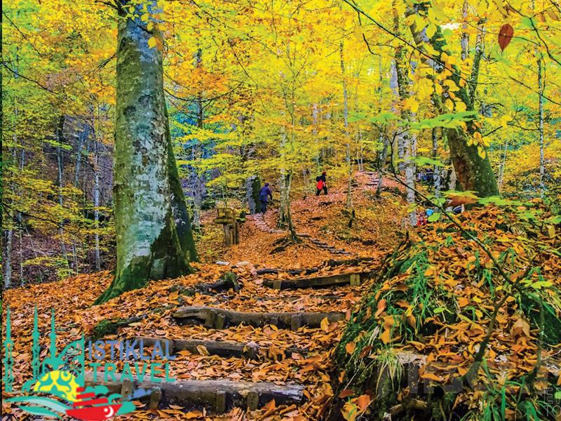 روعة غابات سبانجا