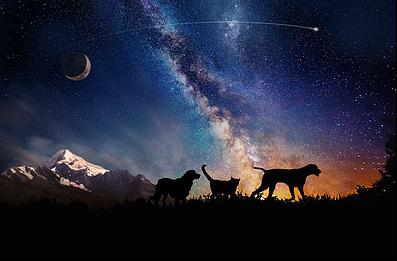 cremated pets in space