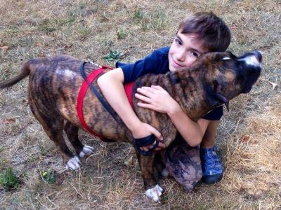 pit bull saves boy from bee attack