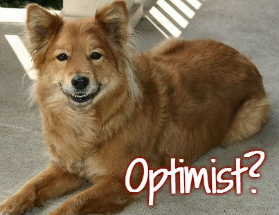optimist dog