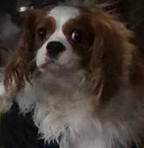 bentley dallas ebola patient's dog
