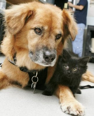 boots dog nanny with black kitten