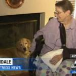 Golden Retrievers Help Save Elderly Dog Mom After She Falls