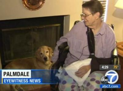 dogs save elderly owner who fell