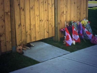 nathan cirillo dogs look under gate