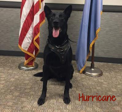 secret service dog Hurricane