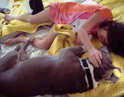 abcde santos and pup-cake pit bull service dog