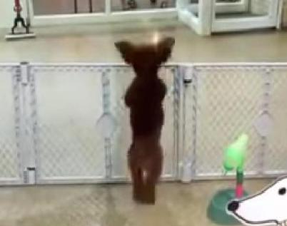 day care dog happy dance viral video