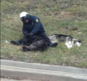 kansas city cop saves two stray dogs