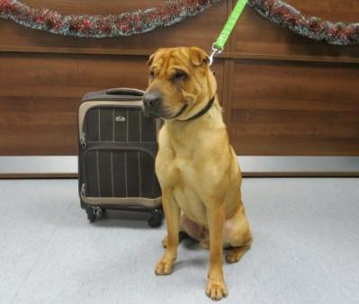 dog left with suitcase at train station