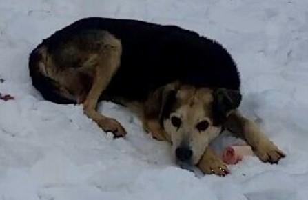 charlie new york city stray dog